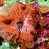 沖縄本島のダイビングで撮影したヒロエダコケムシの水中写真