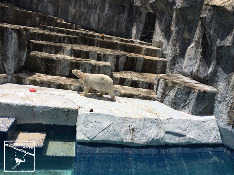 2017 ゴールデンウィーク 家族旅行 愛媛県 松山市 とべ動物園