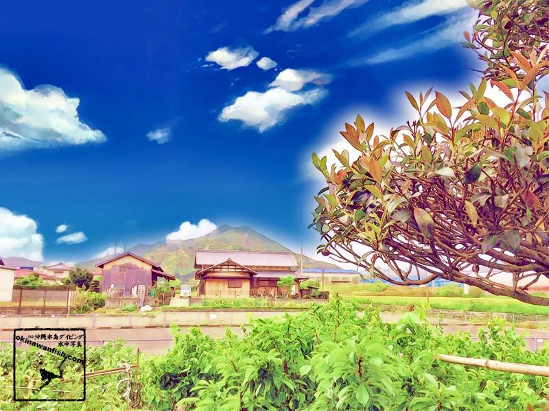 愛媛県 豊かな自然 猟銃の乾いた音 キツツキの突く音が響き渡る空間