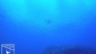 2017年 梅雨明け 沖縄県 恩納村 真栄田岬 水中写真 ダイバー