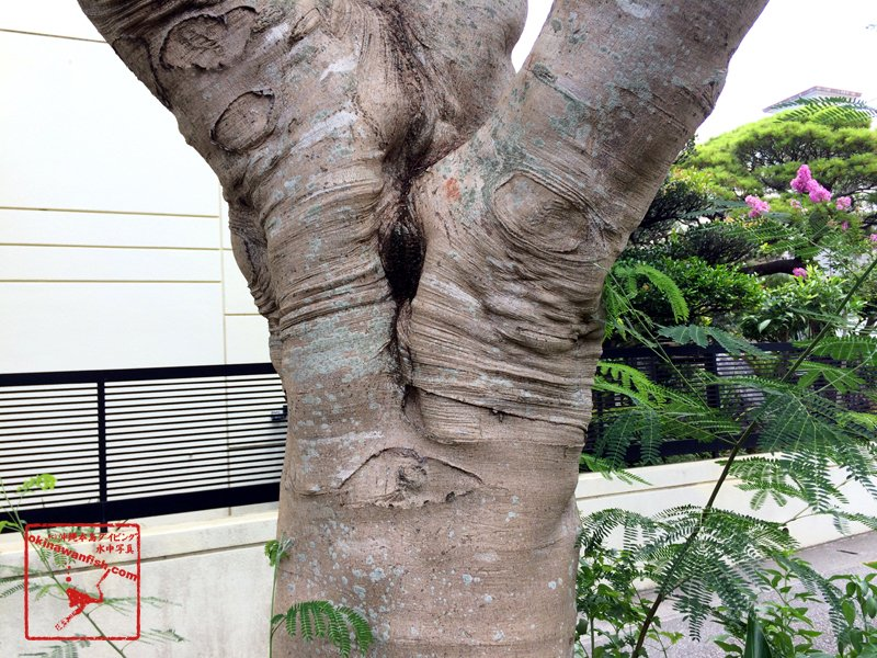 木に付いた黒カビ(のイメージ)