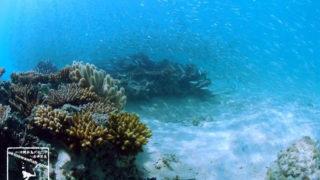 沖縄本島の海水浴(シュノーケリング)で撮影した水中写真