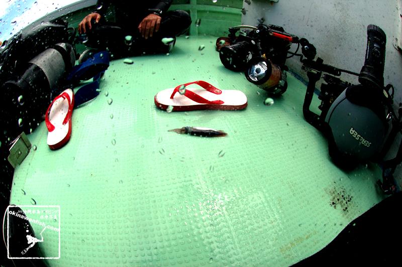 USS EMMONSへ向かっている途中、船に飛び込んできたイカ