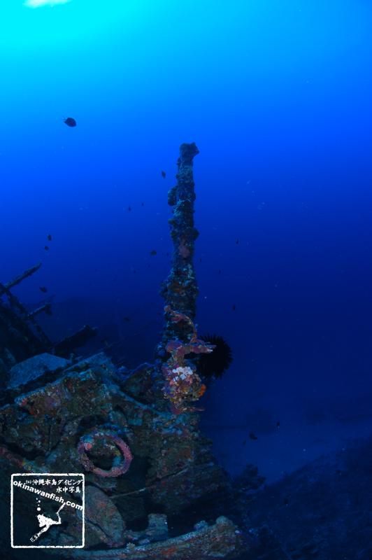 沖縄ダイビング 離島 - 古宇利島 USSエモンズ