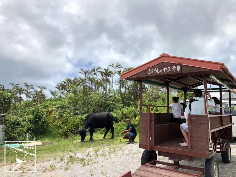 沖縄 水牛