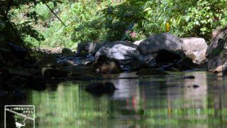 沖縄の川遊びでレプトスピラ症患者が過去最多