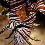 沖縄本島のダイビングで撮影した寄生虫の水中写真