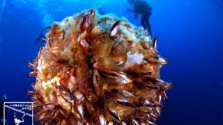 沖縄ダイビング 古宇利島USSエモンズ 水中写真